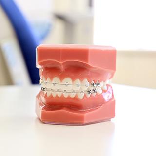 杉山矯正歯科 歯の模型
